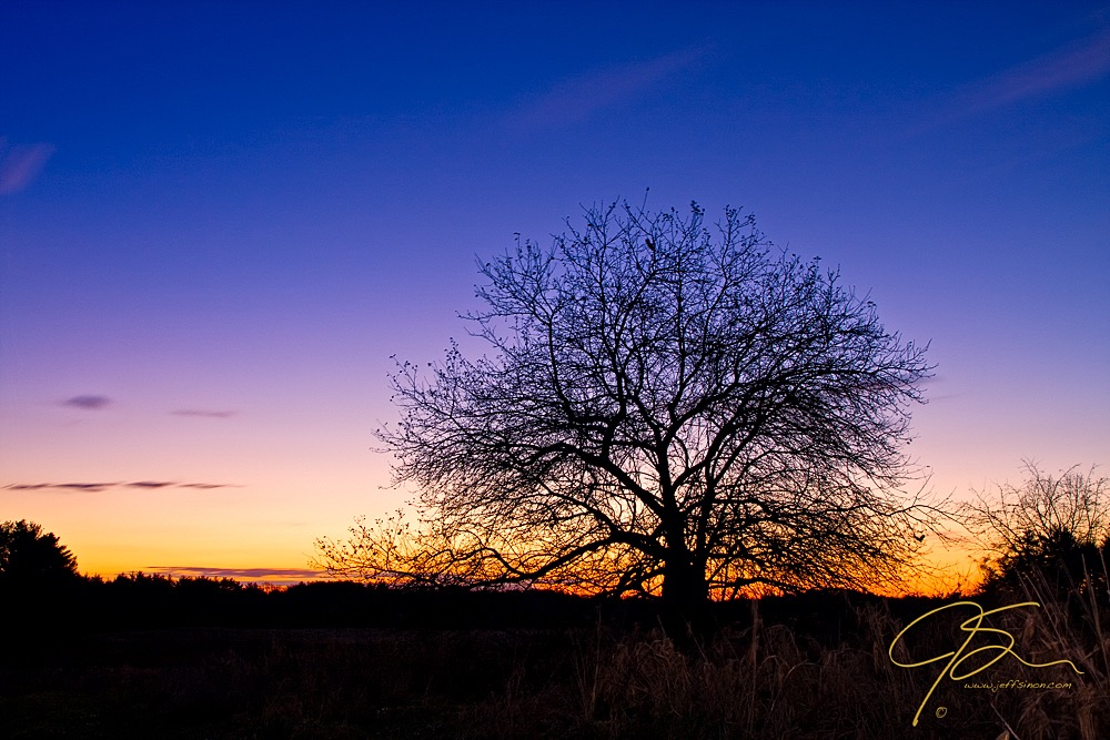 silhouette of tree in front of sunrise