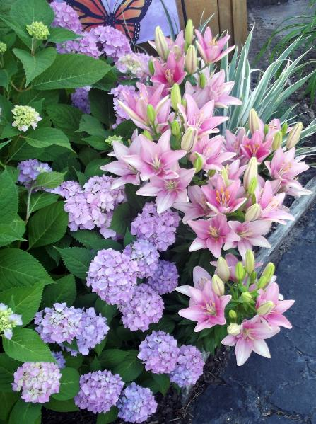 Purple hydrangeas and pink lily of the valley