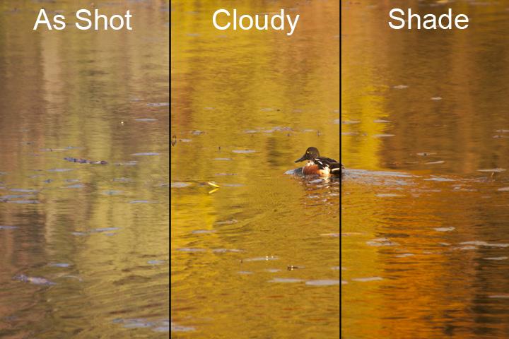 golden hour photography, golden hour, photography, white balance, cloudy white balance, shade white balance