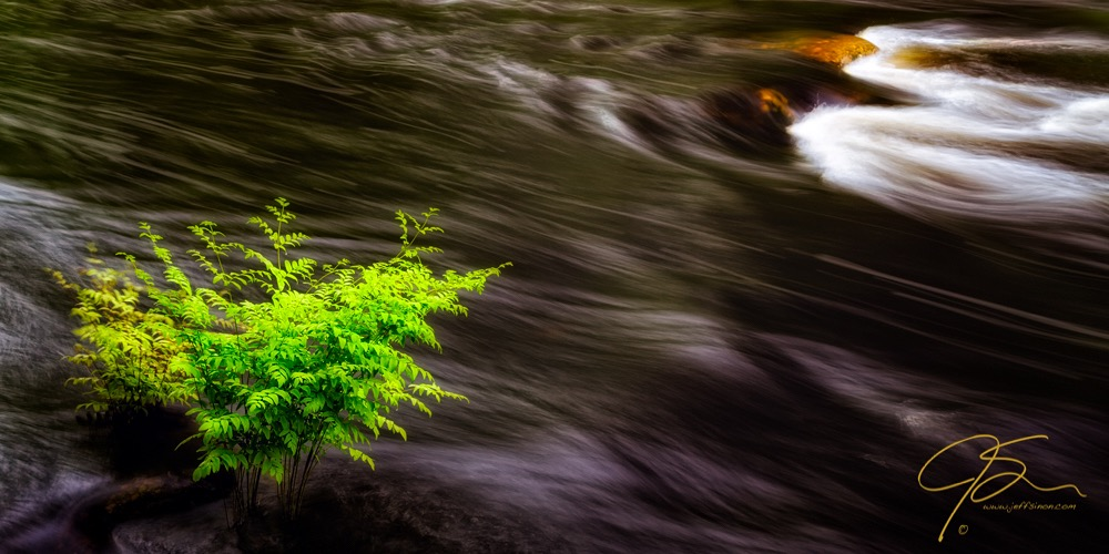 flowing river and fern