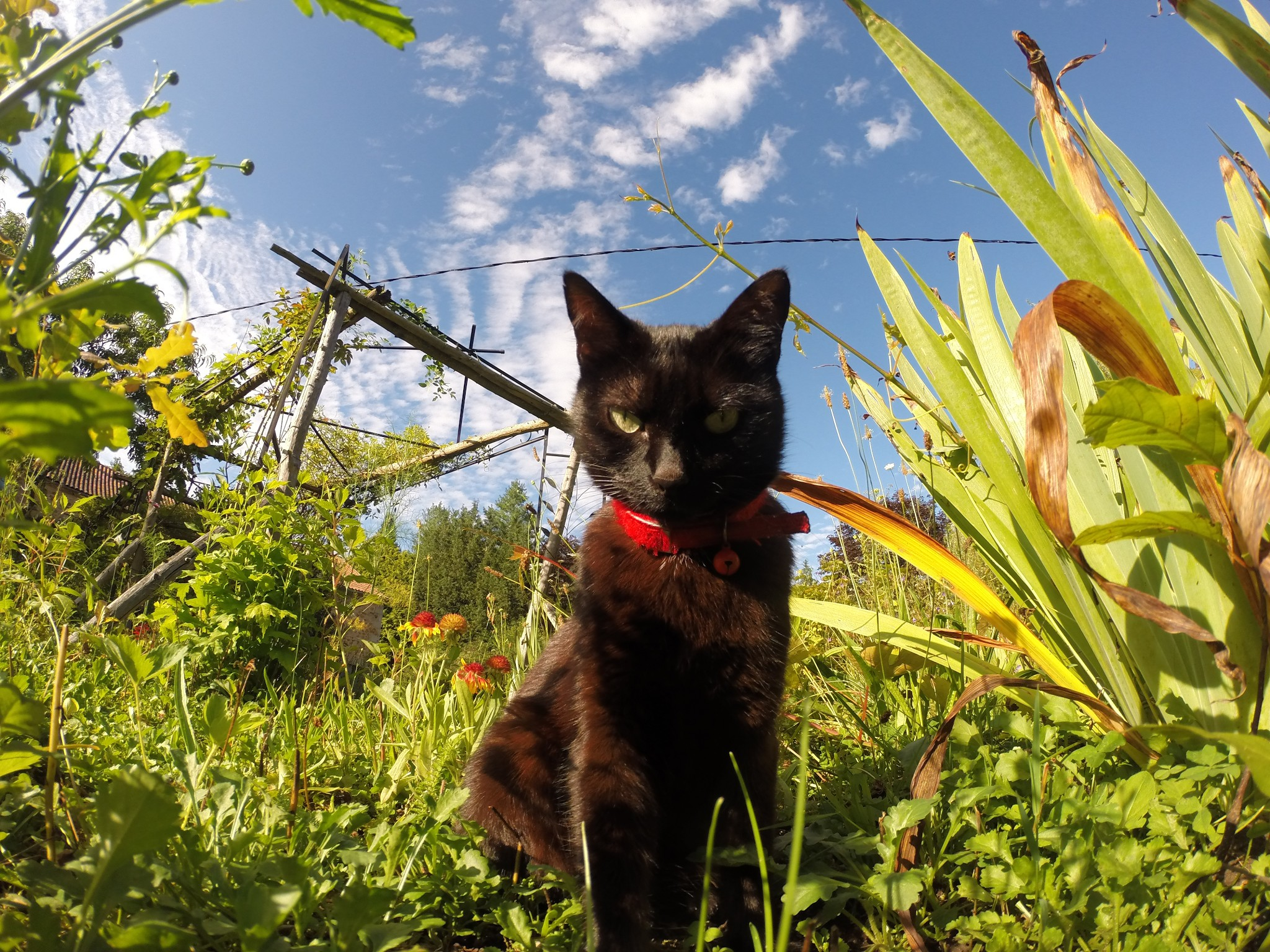 brown cat staring at camera in field