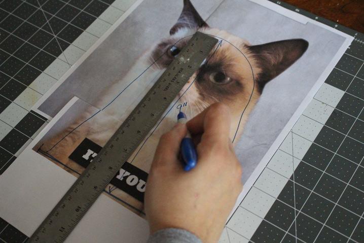 Grumpy Cat Measurements