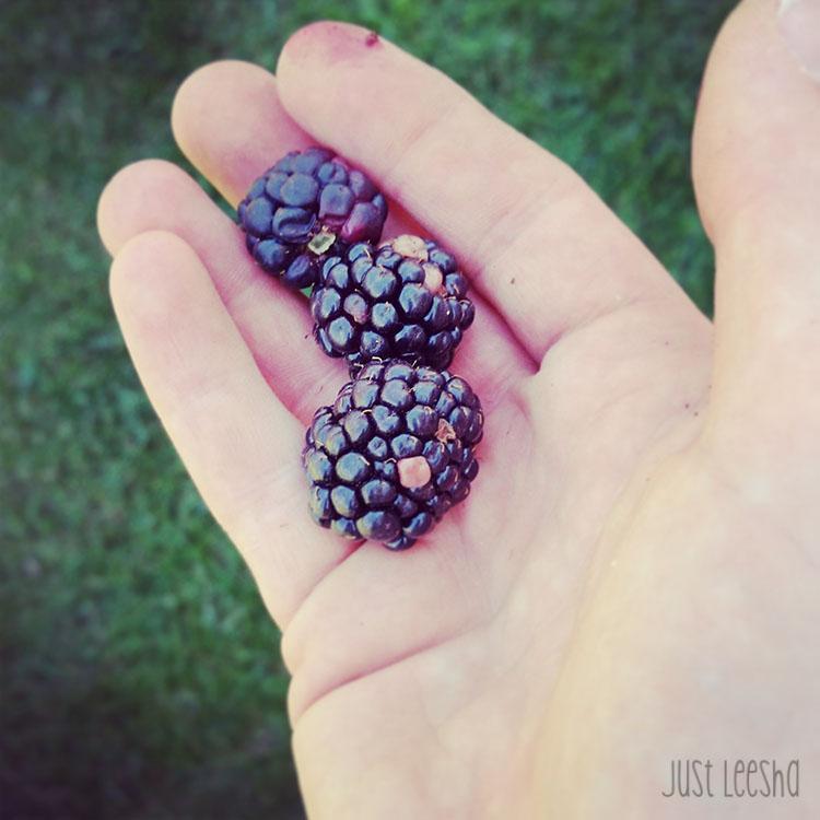 Hand holding blackberries