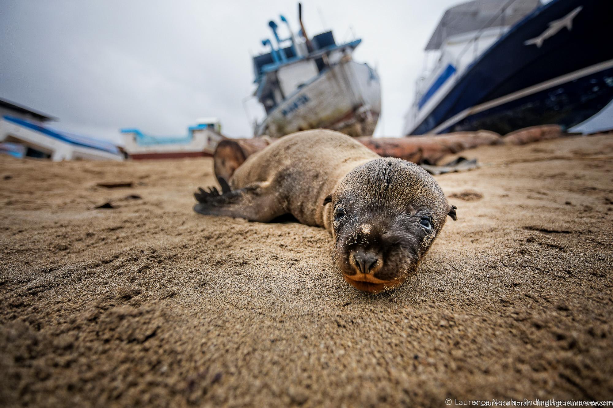 baby sea lion on the beach