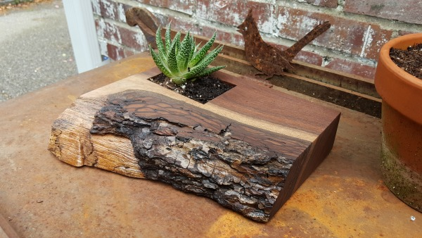 finished planter with succulent main