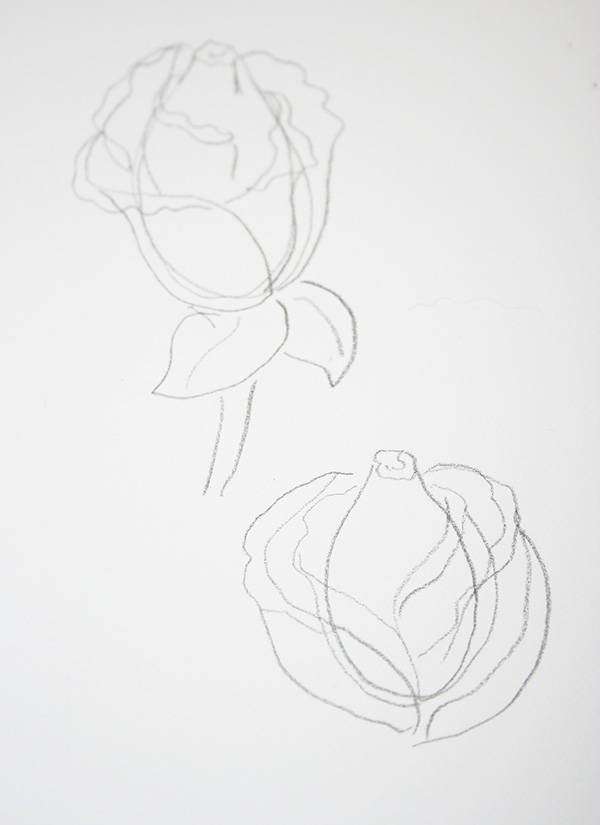 Gently open roses