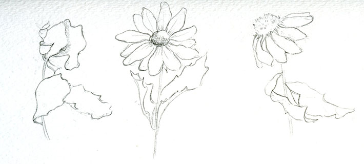 Flower poses for sketching