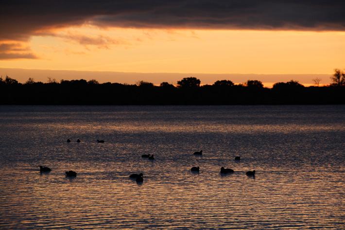 Sunrise silhouette of ducks on a lake