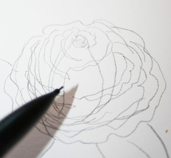 Oprn rose