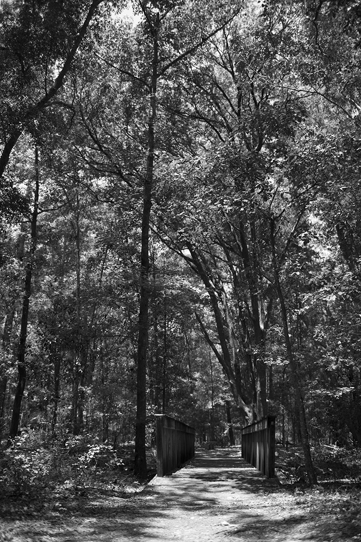 Poor black and white forest photo