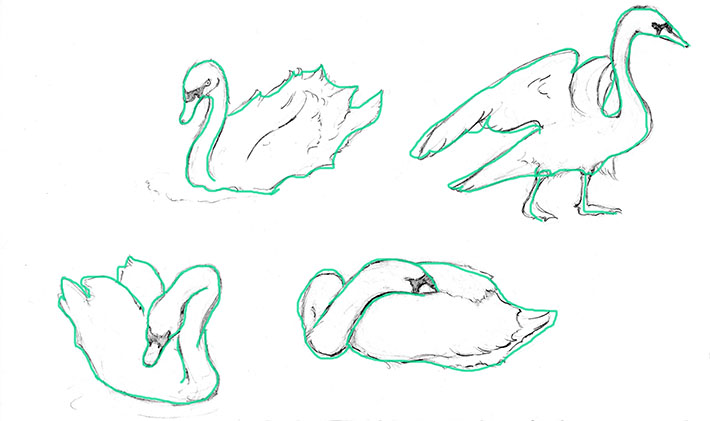 How to Draw a Swan, Step 1: Outline the Body