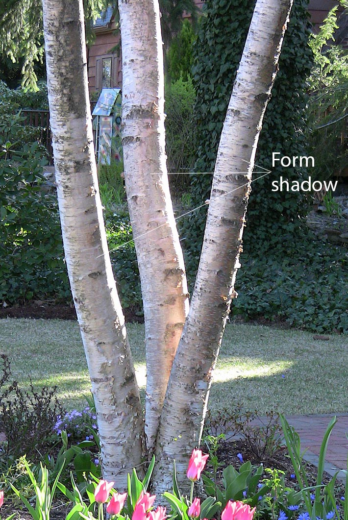 Form Shadow on a Tree