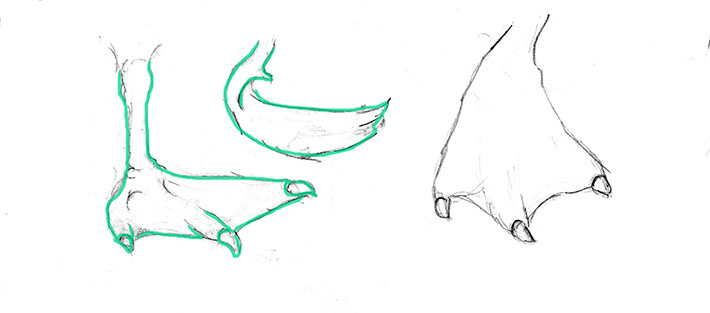 Outline of a Swan's Foot