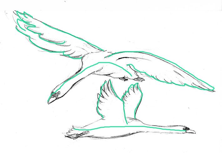 Outlines of Flying Swan Drawings