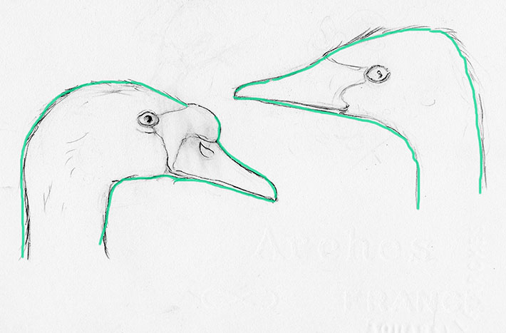 How to Draw the Outline of a Swan Head