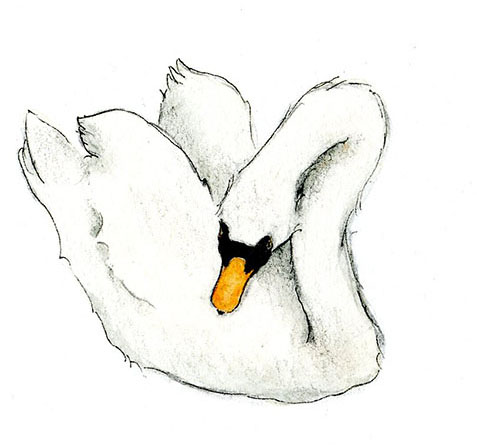 Learn how to draw a swan on Craftsy