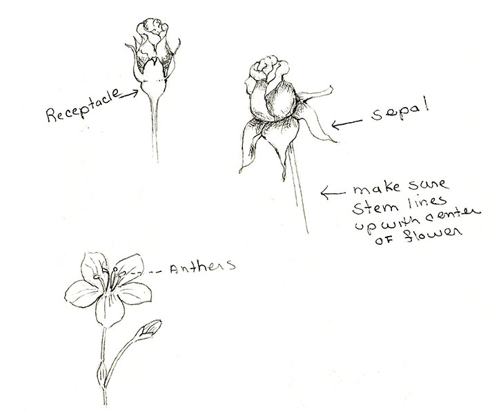 Parts of Flowers for Sketching