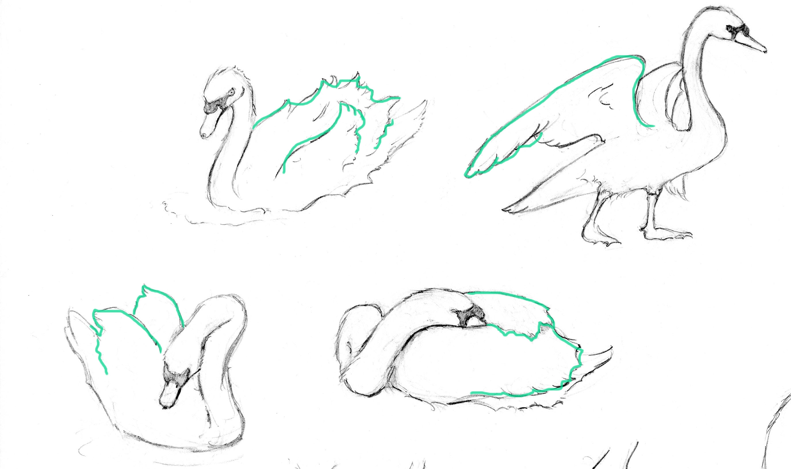 How to Draw Swan Wings