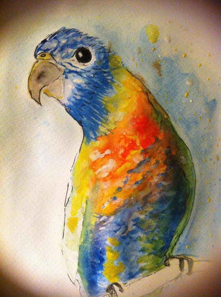 Tonto the Watercolor Bird