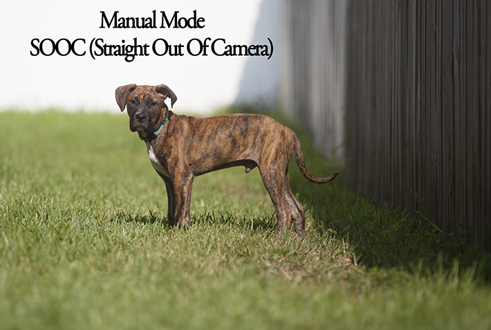 Manual Mode Dog Example