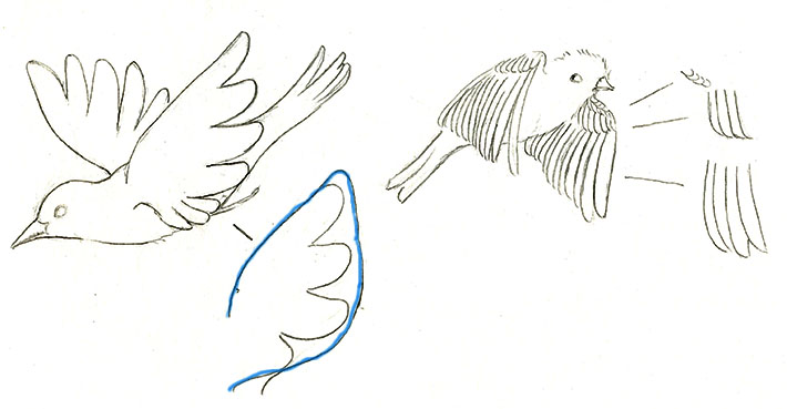 Drawing bird wing outlines