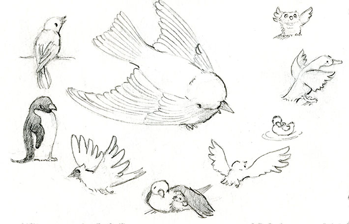 Drawing bird wing examples