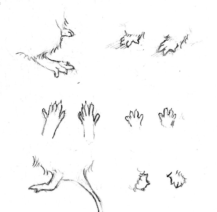 Drawing Mouse Paws