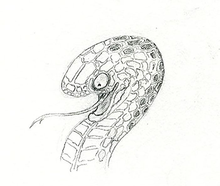 Finished sketch of scale pattern detail on snake