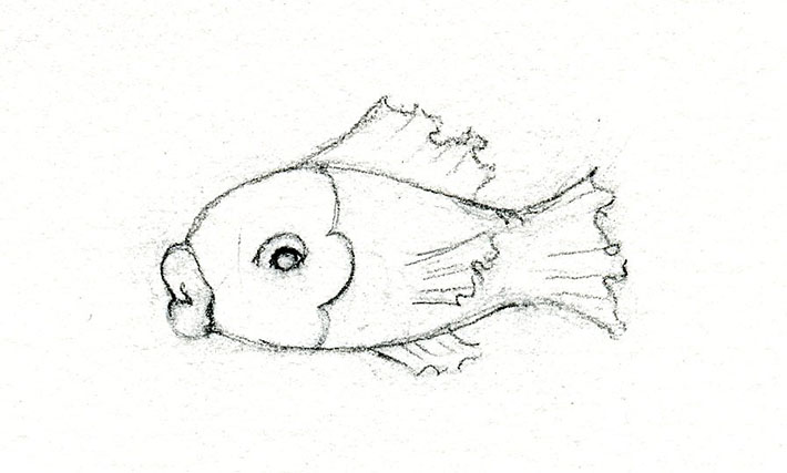 Preparing a fish sketch for drawing scales