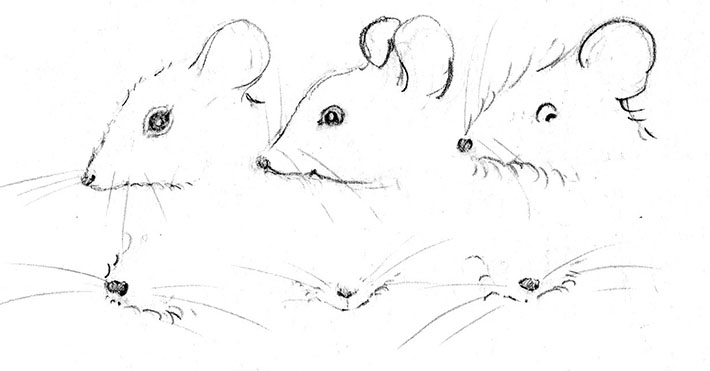 How to Draw Mouse Whiskers in Pencil