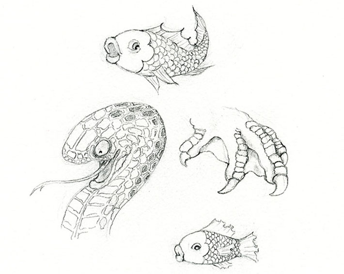 drawing the various patterns of animal scales