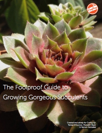 The Foolproof Guide to Growing Gorgeous Succulents