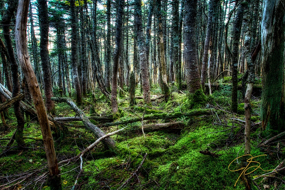 Moody moss covered forest