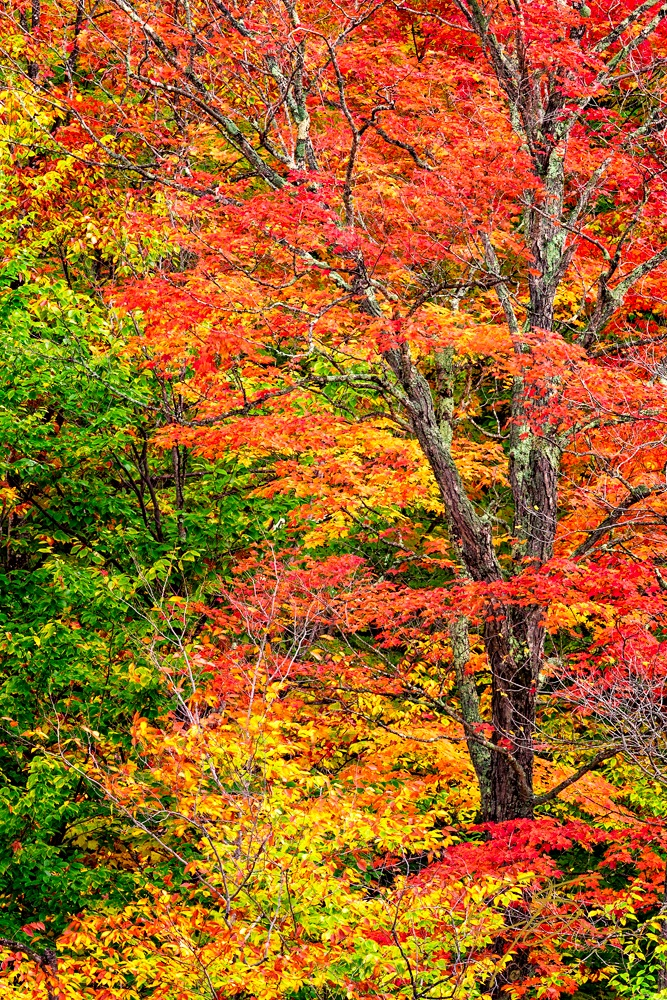 The red, gold and orange of the fall foliage