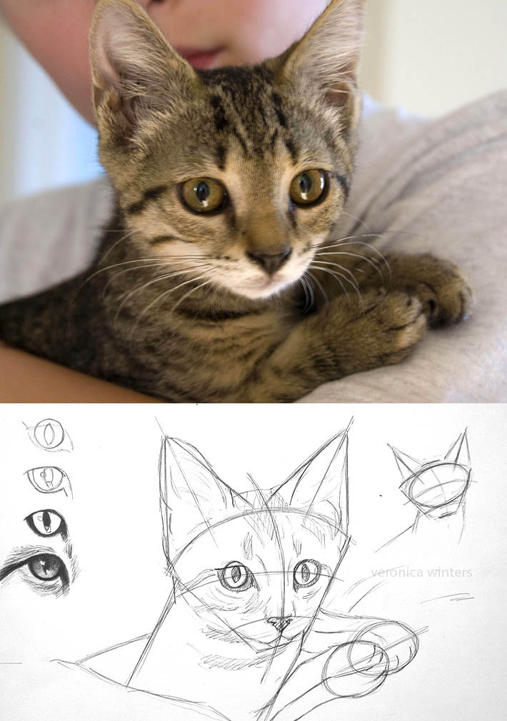 drawing cat's eyes and head
