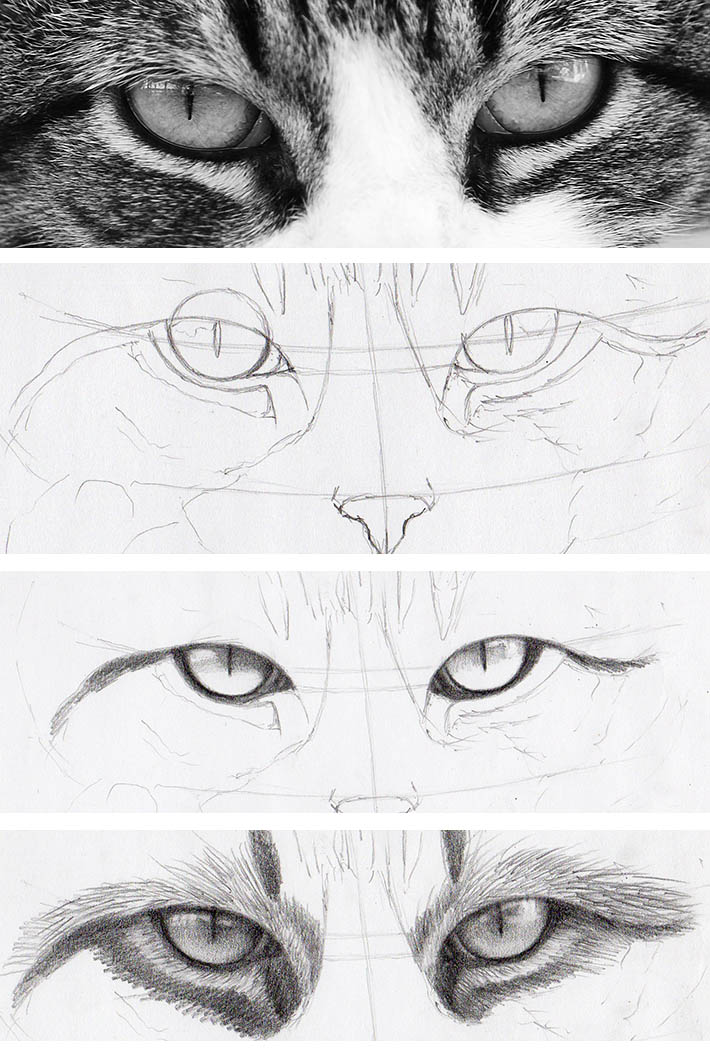 realistic drawing of cat's eyes in steps