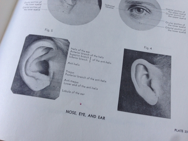 Anatomical Ear Reference for Drawing