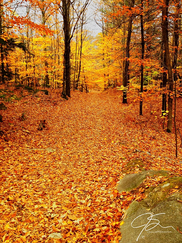 A path leads through the golden forest of autumn