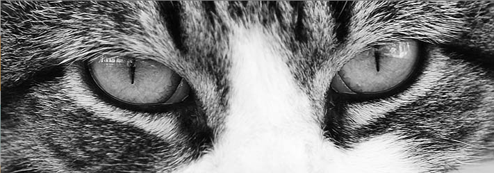 Black and White Cat Eyes