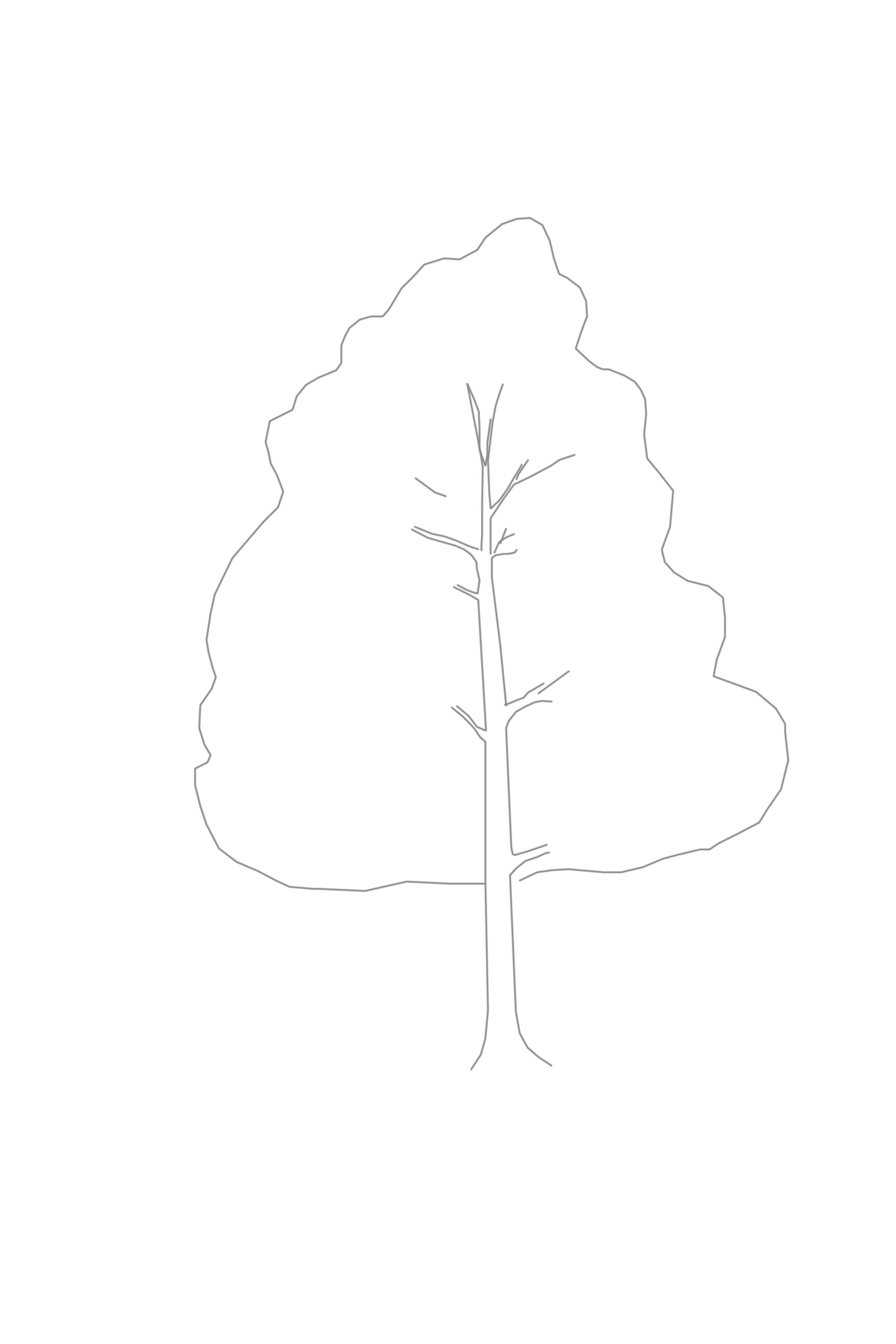 Outline of Tree leaves