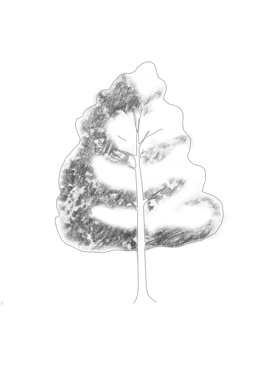 Add Shading on Tree