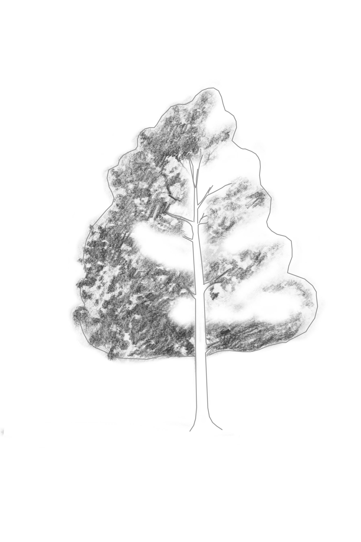 Shading Tree Tufts