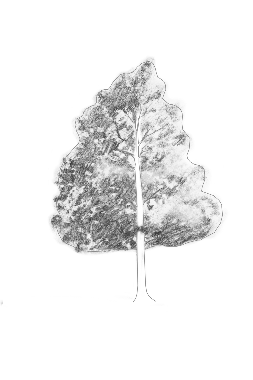 Shading Within Tree