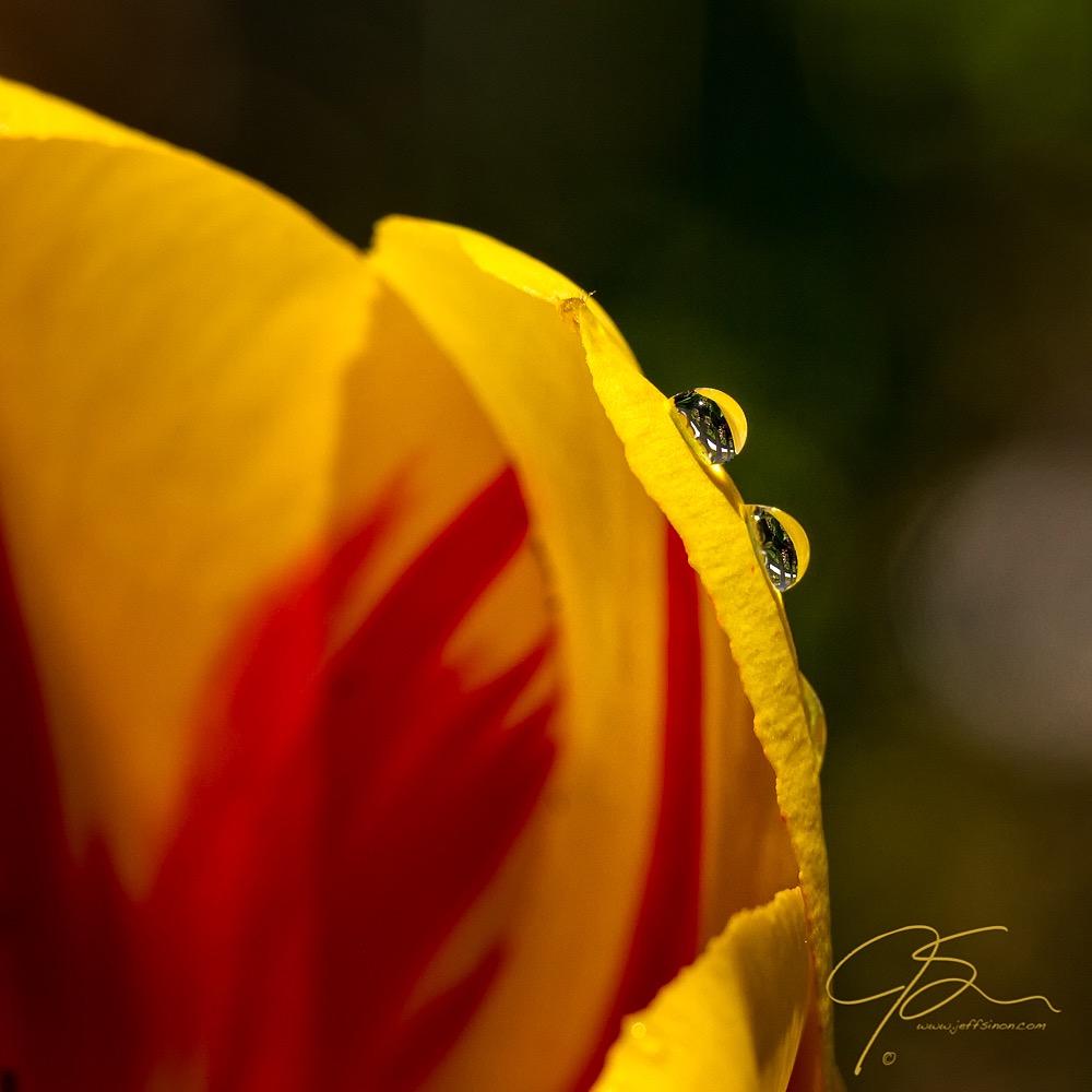 Water Droplets on Flower