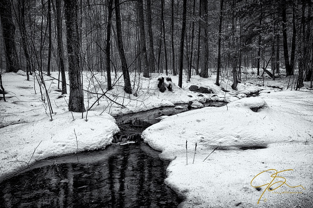 Black and white photo of a stream flowing through the winter woods.