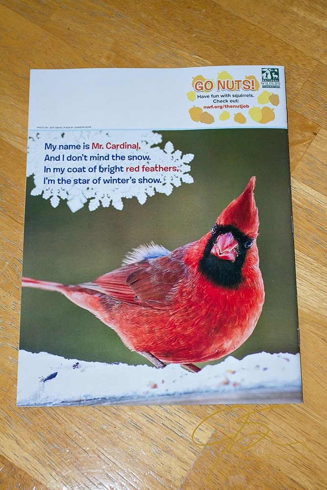 male cardinal on the back cover of ranger rick jr magazine