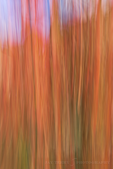 Sumac with Motion Blur
