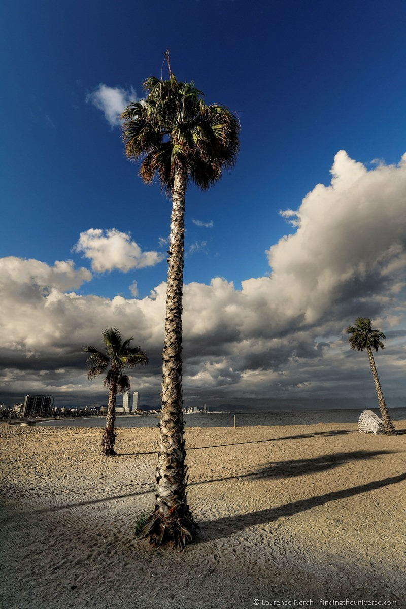 Wide Angle Photography - Palm Tree Barcelona