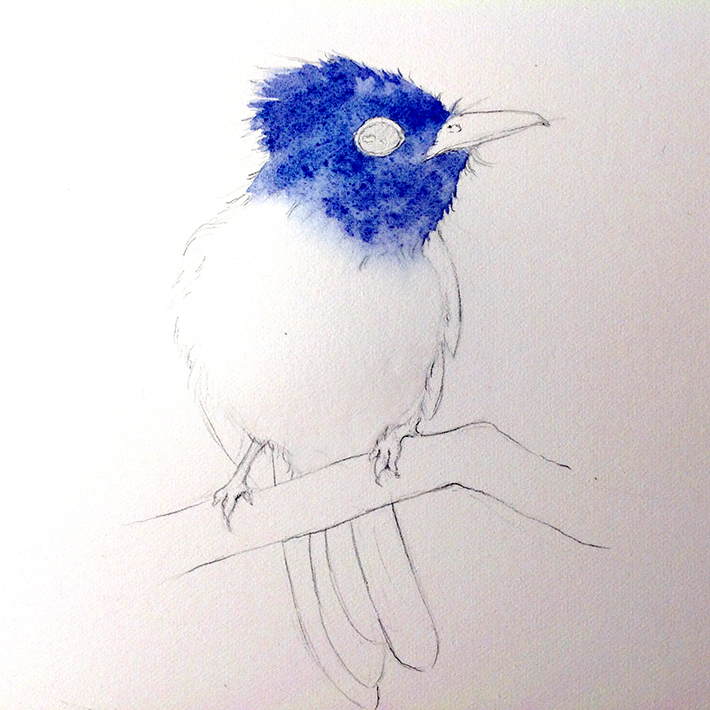 starting a bird painting
