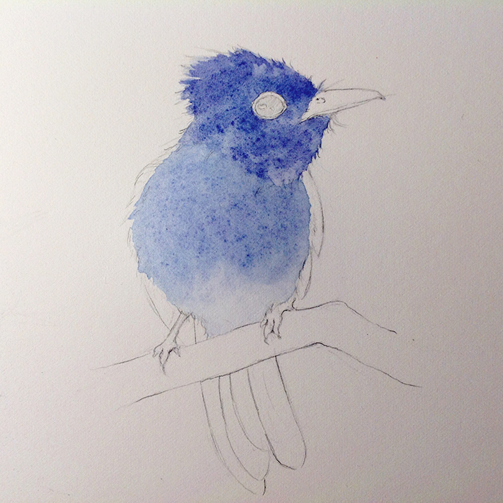 paint a fluffy bird